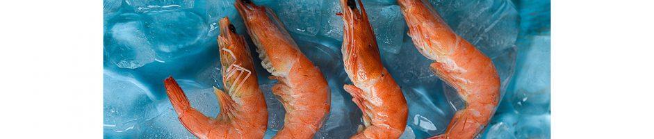 Criação de camarão e peixe exige cuidado com a água